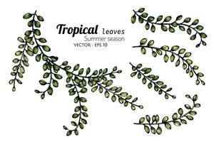 conjunto de botões de folhas tropicais vetor