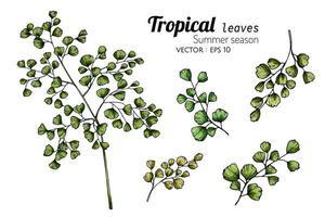 conjunto de flores de folhas de samambaia vetor