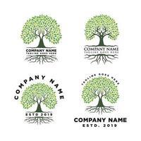 raiz da inspiração de design de logotipo de árvore vetor
