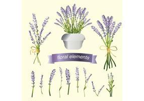 Conjunto de vetores de flores de lavanda