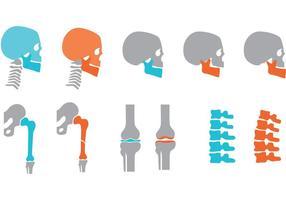 Vetores de ossos ortopédicos e articulações