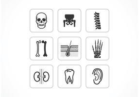Ícones de vetores de ossos e juntas livres