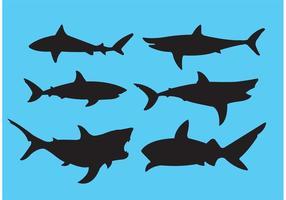Grande tubarão branco vetor