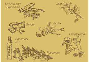 Especiarias desenhadas à mão vetor