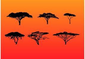 Conjunto de árvores de acácia em silhueta vetor