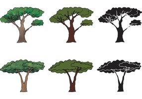 Série livre do vetor da árvore da acácia