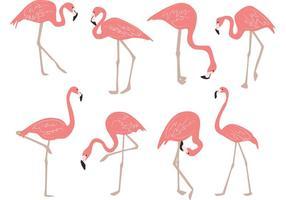 Vetores desenhados a mão de flamingo