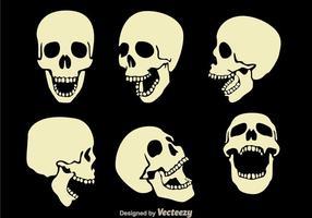 Vetores do crânio