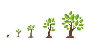 conjunto de crescimento de plantas ou árvores vetor