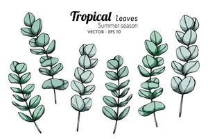 conjunto de folhas tropicais de temporada de verão