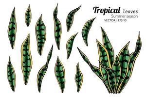 conjunto de folhas selvagens tropicais