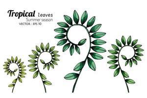 conjunto de folhas tropicais enroladas mão desenhado conjunto