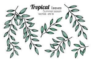 conjunto de folhas botânicas tropicais