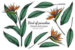 conjunto de desenho de flor ave do paraíso