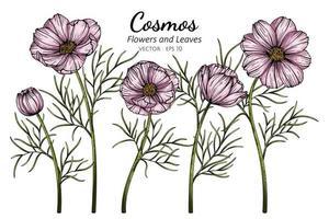 ilustração de flor e folha de cosmos rosa vetor
