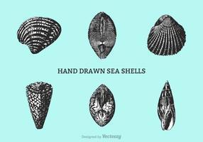Vetor de conchas desenhadas à mão grátis