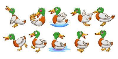 conjunto de desenhos animados de pato vetor