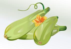 Vetor Zucchini Vegetable