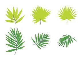 Vetores de folha de palma grátis