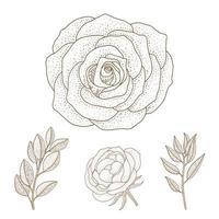 folhas e rosas vintage mão desenhada vetor