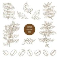 conjunto de botânica de café vintage vetor
