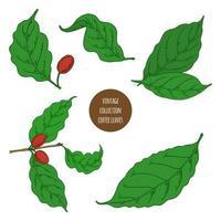 conjunto de folhas e grãos de café vetor