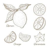 conjunto de desenhos de frutas cítricas desenhadas à mão vetor