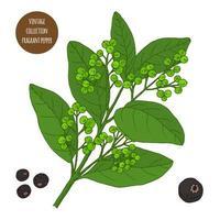 design de botânica vintage pimenta perfumada vetor