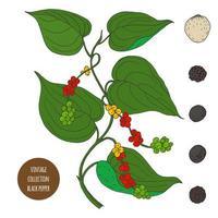 design de botânica vintage pimenta preta vetor