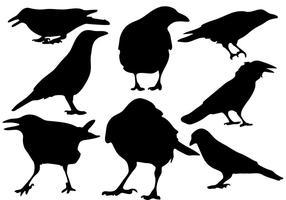Vetor de silhueta de corvo grátis