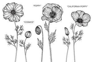 conjunto de mão desenhada variedade de papoula flores e folhas vetor