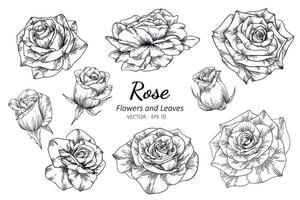 conjunto de rosas desenhadas mão vetor