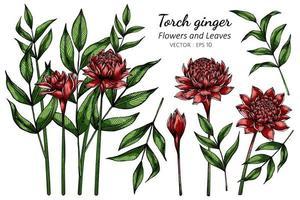 conjunto de flor de gengibre tocha vermelha