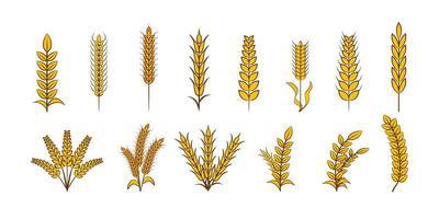 conjunto de elementos de trigo vetor