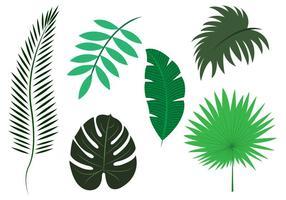 Vetor conjunto de folhas de palmeira
