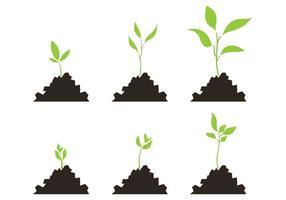 Conjunto de vegetais da escala de crescimento da planta vetor