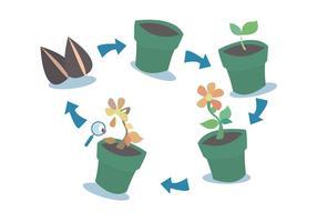 Conjunto de vetores do ciclo de crescimento da planta