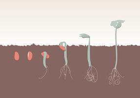 Evolução do crescimento da planta Vector grátis