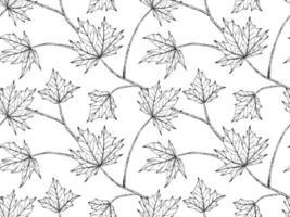 padrão de folha de maple desenhada de mão vetor