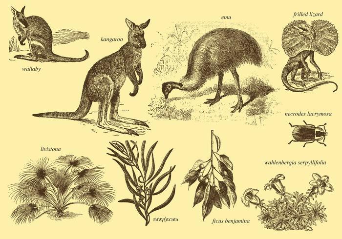 Flora E Fauna Dell'Australia vettore
