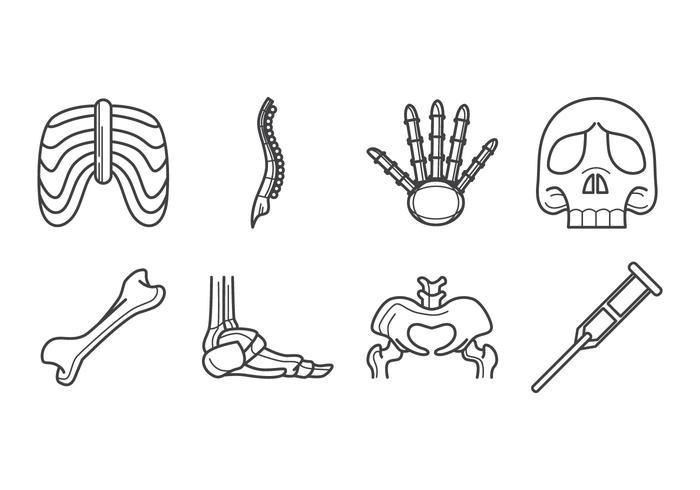 Vettore dell'icona dell'osso umano