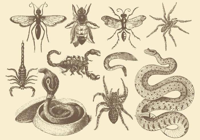 Animali velenosi vettore