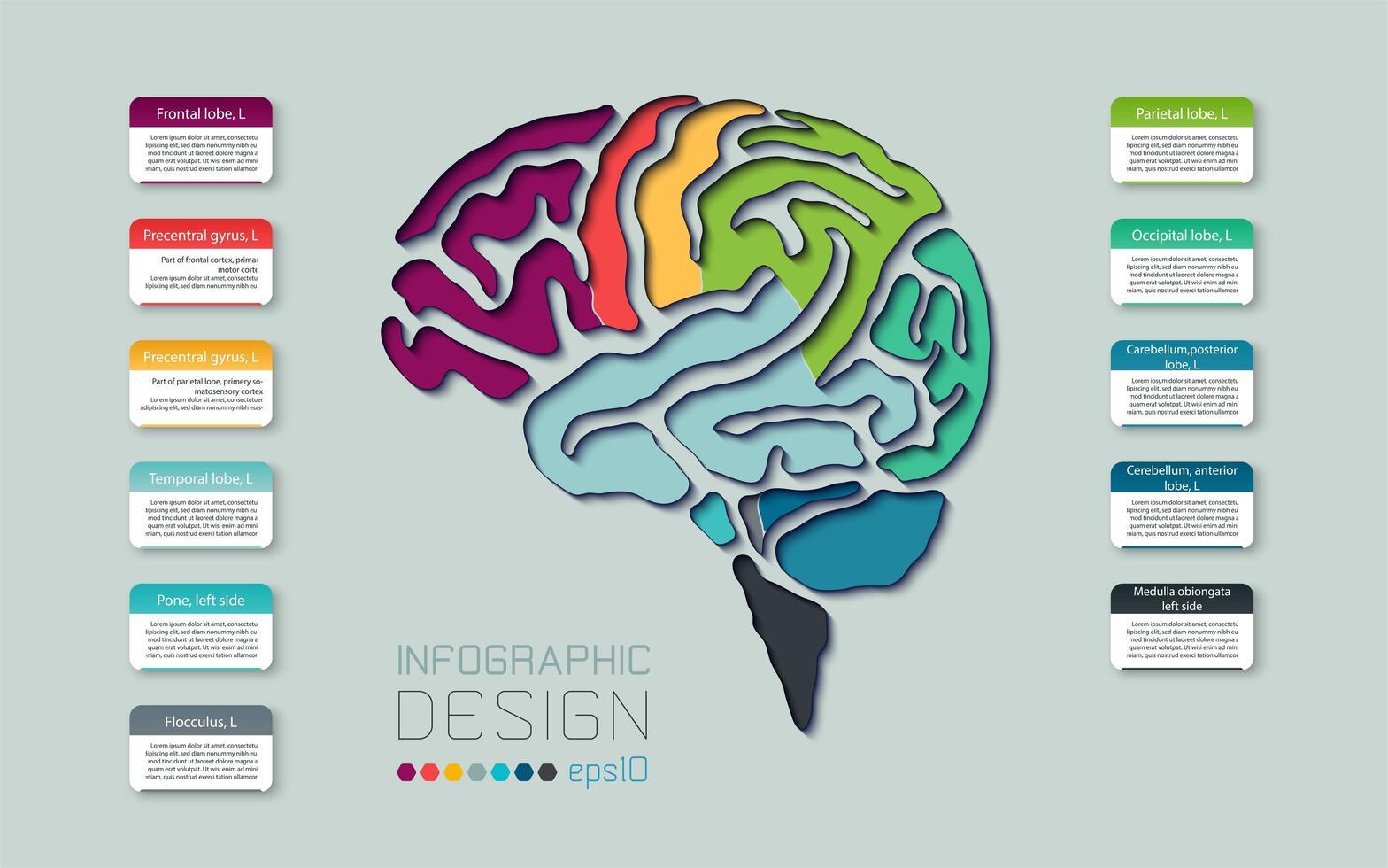 diagramma del cervello linea colorata infografica vettore