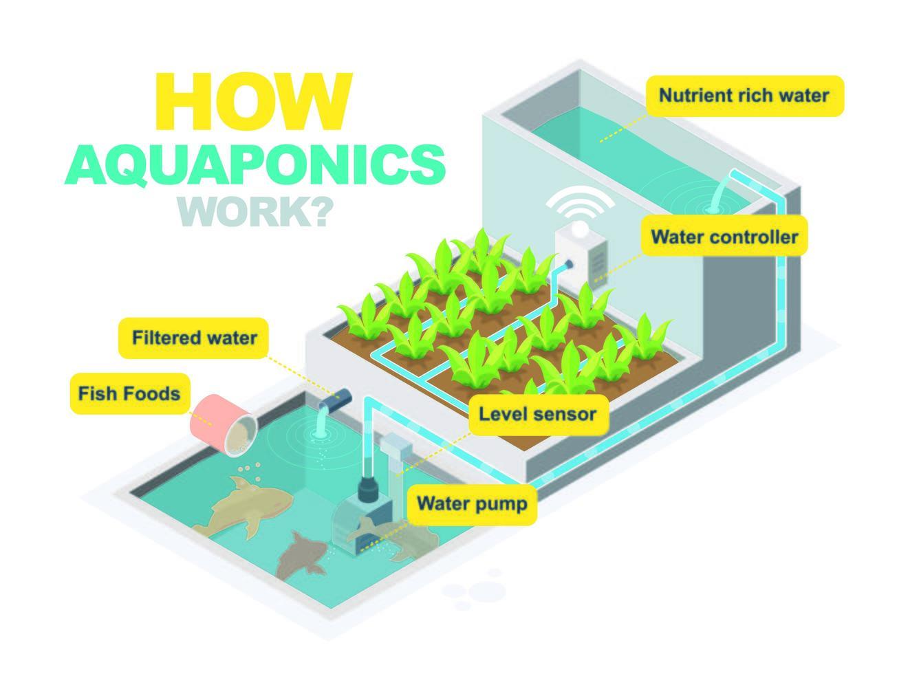 diagramma del sistema acquaponico vettore