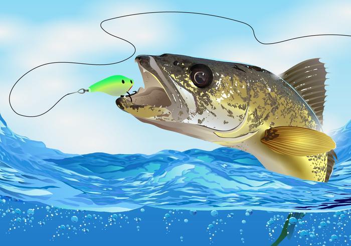 Walleye Fish prende l'esca vettore