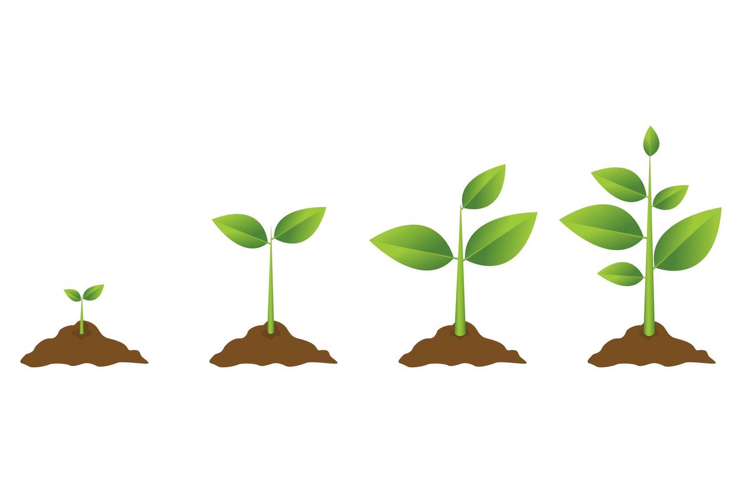 processo di crescita della pianta vettore