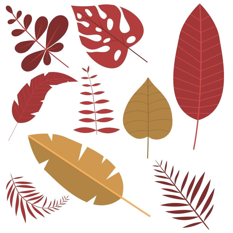 foglie tropicali isolate vettore