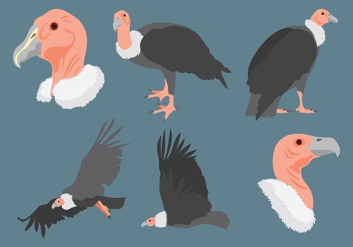 Condor icone vettoriali gratis