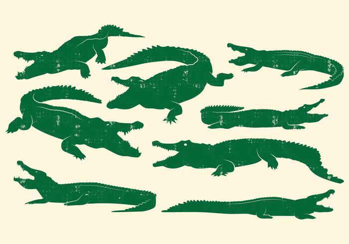 Insieme di vettore di disegno del coccodrillo