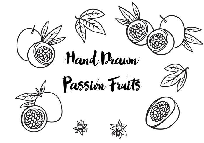 Vettore disegnato a mano libera di frutti della passione